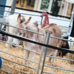Millers Ark animals